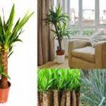 生活の中に癒しをもたらす「観葉植物」