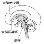 脳がさえる習慣