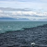 津波は海を再生させた